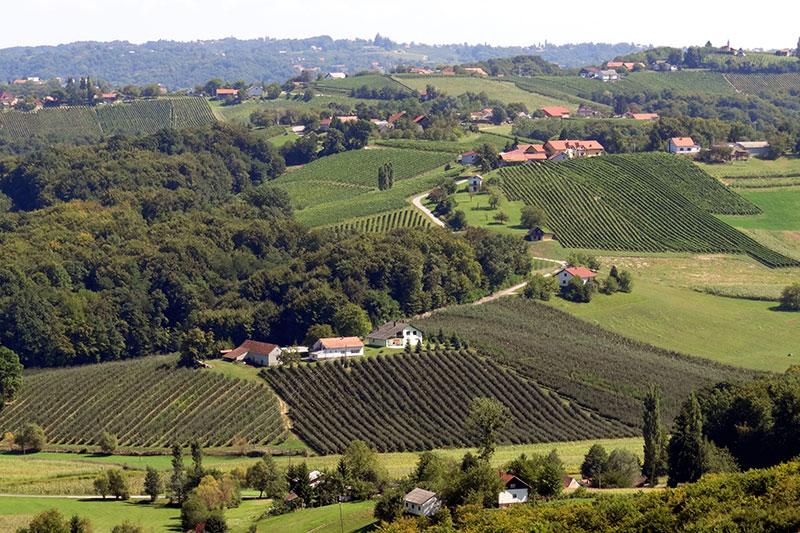 Međimurska vinska cesta